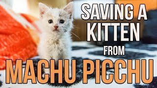 Download Saving Munay, the Machu Picchu kitten Video