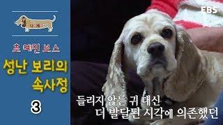 Download 세상에 나쁜 개는 없다 - 초 예민 보스 성난 보리의 속사정 #003 Video