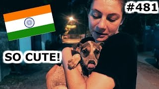 Download HOME MADE INDIAN FOOD AND CUTE PUPPY LOVE | KOCHI DAY 481 | INDIA | TRAVEL VLOG IV Video