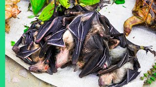 Download Eating BAT SOUP in North Sulawesi, Indonesia! What if I told you it's actually good? Video