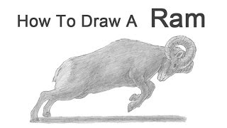 Download How to Draw a Bighorn Ram Video