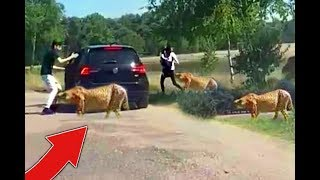 Download Stupid Family *LEAVES* Car AT ZOO! Video