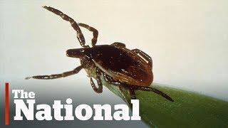 Download Lyme disease growing in Canada Video