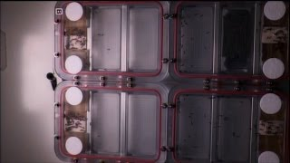 Download Space Station Live: Ants in Space Video