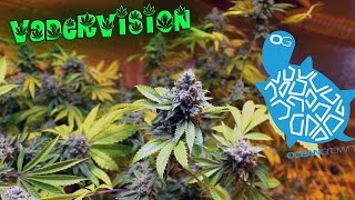 Download Grow Op Final Harvest and Garden Update! 🍁 Video