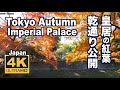 Download [4K]TOKYO JAPAN 東京・皇居•乾通りの紅葉 The Autumn leaves of the Imperial Palace 東京観光 日本の紅葉  ディスカバーニッポン Video