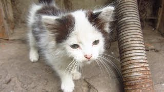 Download Kitten lives in a pipe Video