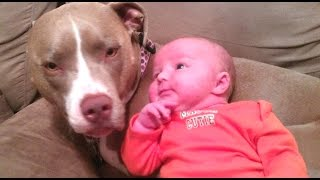 Download Funny And Cute Pitbull Dogs Love Babies Compilation 2015 [NEW] Video