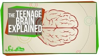Download The Teenage Brain Explained Video