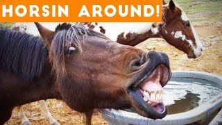 Download Funniest Horse Videos of 2018 Weekly Compilation | Funny Pet Videos Video