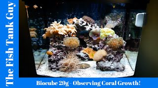 Download Biocube 29g - Observing Coral Growth! (Over months of time!) Video
