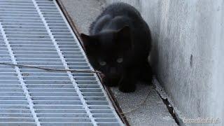 Download 2014 10 15 生きていたクロ Kuro that was not dead【瀬戸の野良猫日記】 Video