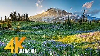 Download 4K Mount Rainier National Park - Nature Relax Video, Summer Scenery - 2 HRS Video