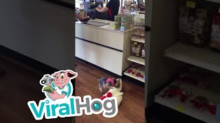 Download This Dog Loves to Shop || ViralHog Video