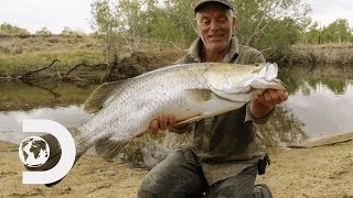 Download Jeremy Wade Finds Rare Fish That Were Affected By The Cane Toad Invasion   Jeremy Wade's Dark Waters Video