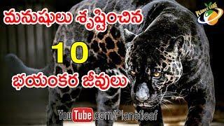 Download Top 10 Weird Hybrid Animals On Earth || మనుషులు శృష్టించిన 10 వింత జంతువులు ఇవే || With Subtitles Video