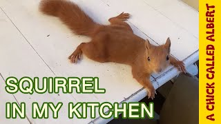 Download Baby Squirrel grew up and Climbs all over me Video