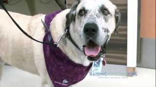 Download Pet therapy: The healing power of Tonka Video