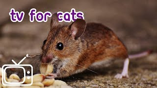 Download Forest Adventure CAT-TV - Rodent, Bird and Wildlife Footage for Cats! Video