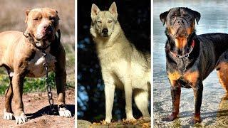 Download Hier Sind Die 7 Am Meisten Verbotenen Hunderassen Der Welt Video