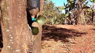 Download Onde Armar Suas Iscas Para Capturar Abelhas Jatai CONFIRA !!! Video