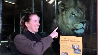 Download Cheyenne Mountain Zoo Staff Profile: African Rift Valley Keeper Amy Schilz January 2019 Video