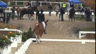 Download First Mule to Compete at US Dressage Finals - Heart B Dyna with Laura Hermanson Video