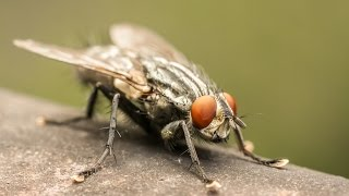 Download How To Get Rid of a Fly Video