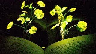 Download Glowing plants Video