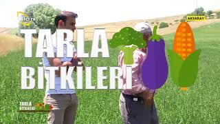 Download Reygras Ekim Ve Hasatı - Tarla Bitkileri / Çiftçi TV Video
