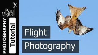 Download Wildlife Photography: How to Photograph Birds in Flight (Canon 1DX Mark i) Video