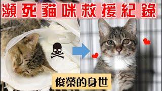 Download 【豆漿 - SoybeanMilk】豆漿的弟弟俊榮登場!! 瀕死小貓救援|Rescue a dying kitten Video