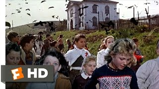 Download Crows Attack the Students - The Birds (6/11) Movie CLIP (1963) HD Video