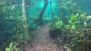 Download Trilha Submersa no Recanto Ecológico Rio da Prata Video