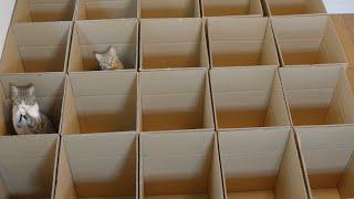 Download お願い戻って来て! おいでおいでする猫 Please, come back! Taro beckon to May Video