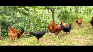 Download Suaahara: Poultry Care Video