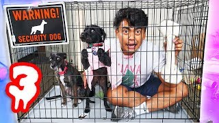 Download Escape The Dog Cage Challenge Part 3! Video