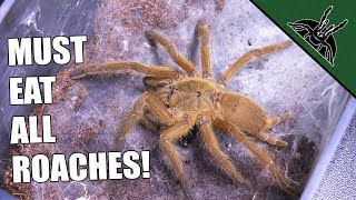 Download SOLUTION FOR YOUR ROACH PROBLEM - #feedvid Video