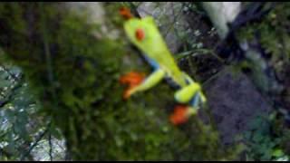 Download rana arborícola del bosque tropical lluvioso Video