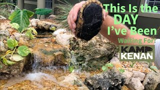Download Chinese Box Turtles NEW HOME by the POND! Video