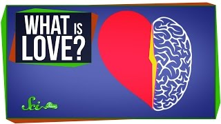 Download World's Most Asked Questions: What Is Love? Video