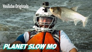 Download Flying Fish to the Face in Slow Motion Video