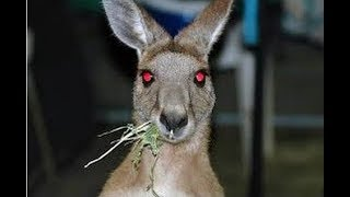 Download 12 Most Mysterious Australian Creatures Ever Caught Video