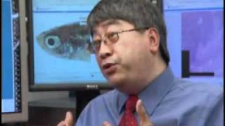 Download Dr. Keith Cheng - Skin Pigmentation Research Using Zebrafish - Penn State College of Medicine Video