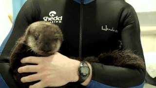 Download Shedd Welcomes Our Newest Resident, Pup 719! (with audio) Video