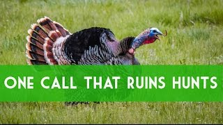 Download Turkey Calling: Greatest Mistake Of Calling Hens. How To Call Turkeys. Video