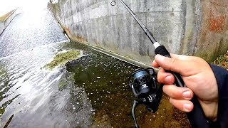 Download Unexpected Catch While Fishing a Small Creek!! Video