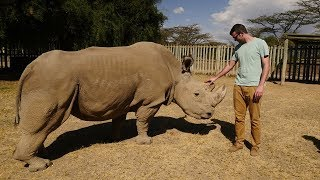 Download Meeting the Last Northern White Rhino in the World Video