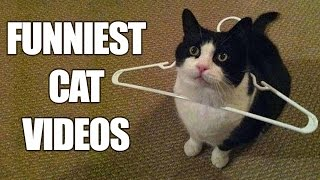 Download *Try Not To Laugh Challenge* Funny Cats Compilation | Best Cat Videos 2016 Video