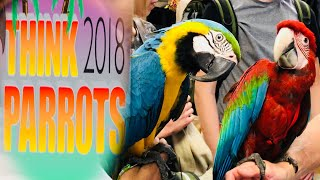 Download Think Parrots Show 2018 || Mikey The Macaw Video